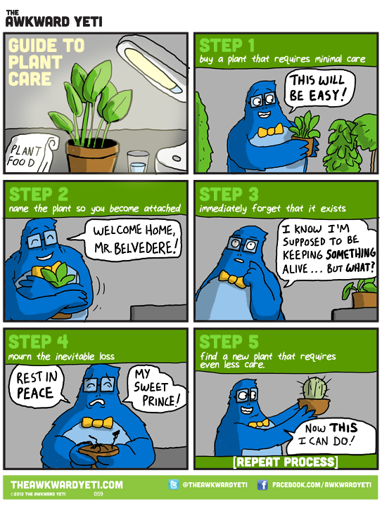 Guide to Plant Care